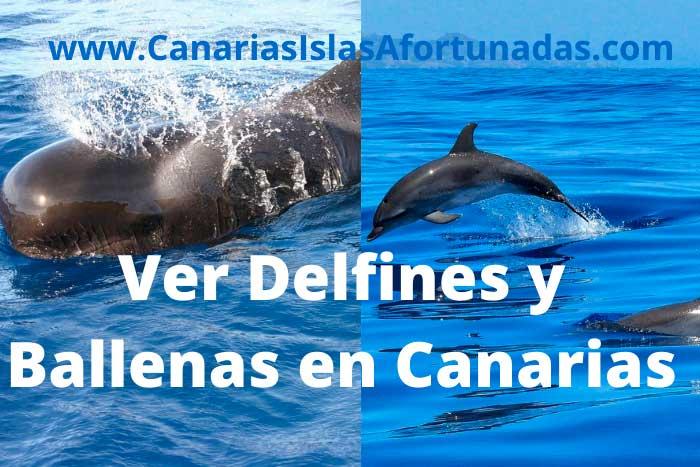 Avistamiento de Delfines, Ballenas y otros cetáceos en las Islas Canarias