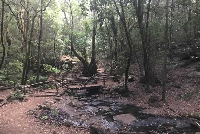 Bosque el Cedro de Hermigua en el Parque Nacional del Garajonay