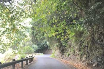 Coche de alquiler en la Isla de La Palma carretera