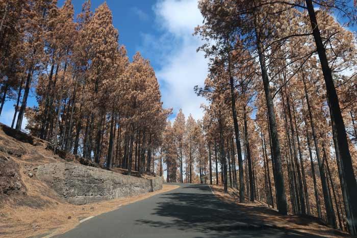 Cumbre de Gran Canaria quemada tras los incendios