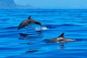 Excursión en barco para avistamiento de delfines en Fuerteventura