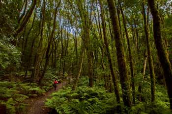 Parque Nacional del Garajonay en la isla de La Gomera
