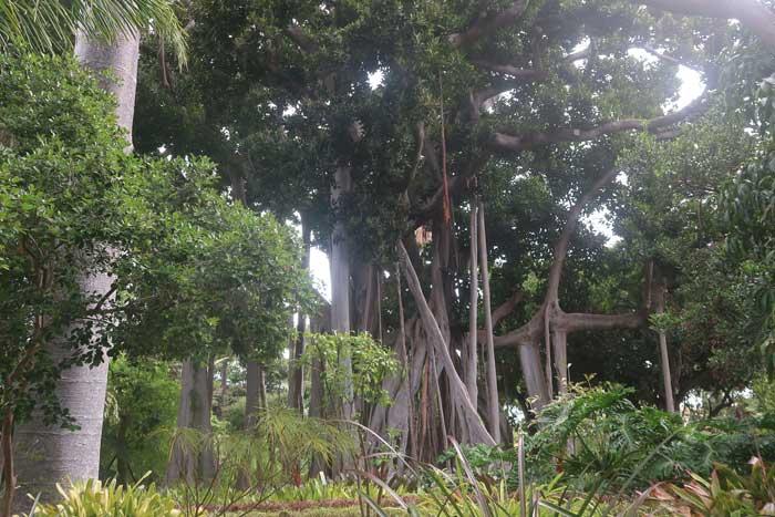 Jardín Botánico de Aclimatación de La Orotava en Puerto de la Cruz
