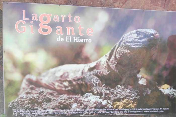 Cartel del Lagarto Gigante de El Hierro en el Lagartario del Ecomuseo de Guinea