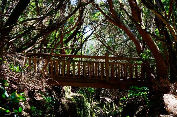 Puente del Sendero de los Sentidos en el Parque Rural de Anaga en Tenerife