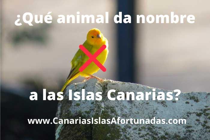 Qué animal da nombre a las Islas Canarias, y no es el canario