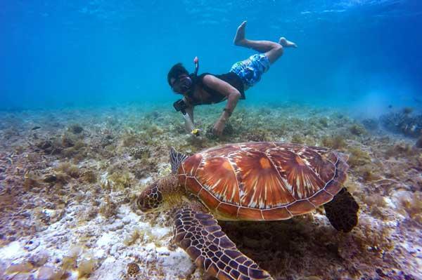Excursión de snorkel con tortugas en La Palma