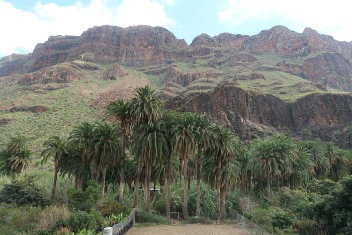 Ruta por el Valle de las mil palmeras del Barranco de Fataga, sur de gran canarias